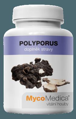 polyporus_vitalni